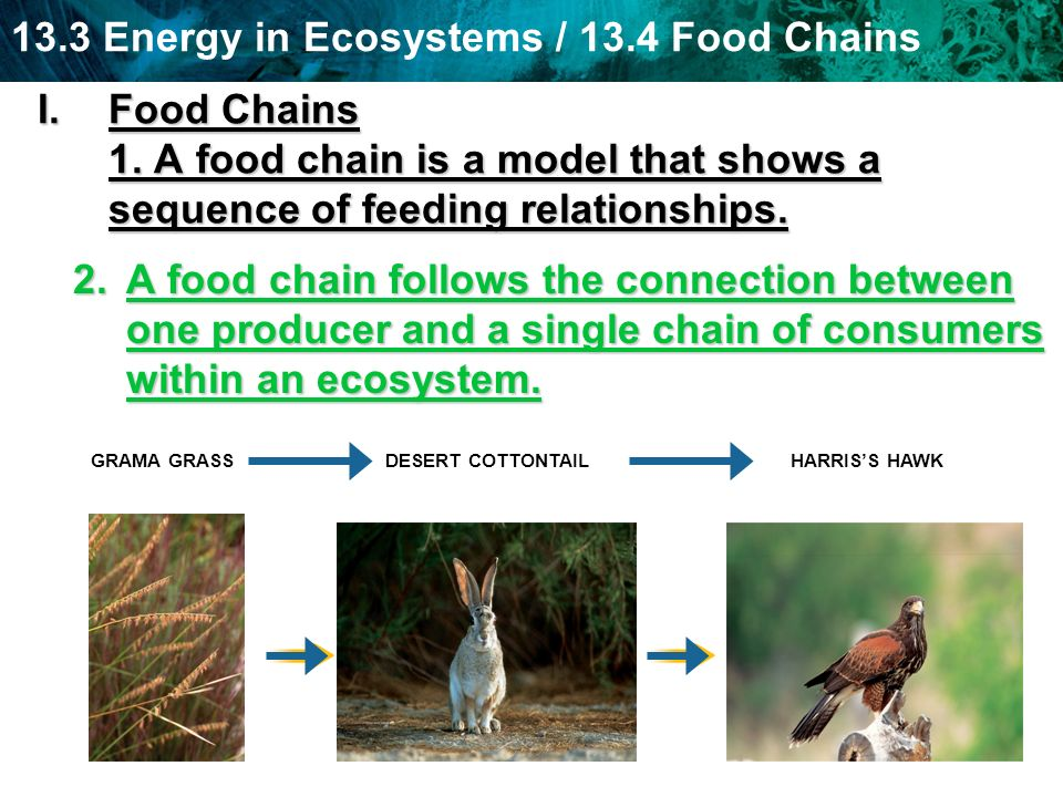 Food Chains 1. A food chain is a model that shows a sequence of feeding relationships.