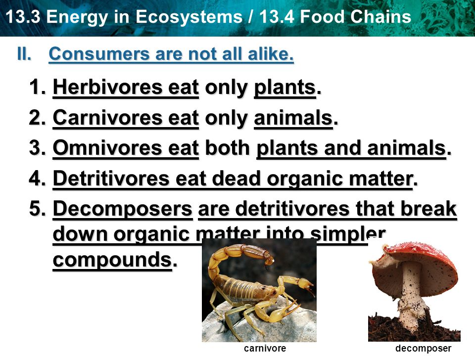 Herbivores eat only plants. Carnivores eat only animals.