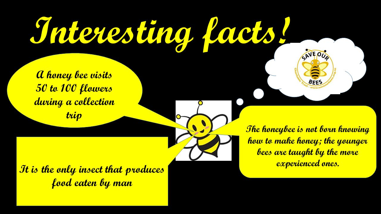 Bees! By Bronte Hemming's. - ppt download