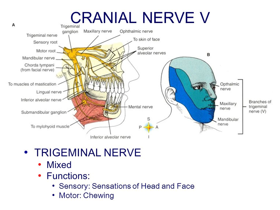 CRANIAL NERVE V TRIGEMINAL NERVE Mixed Functions: