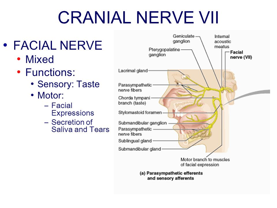Facial nerve and eye functions