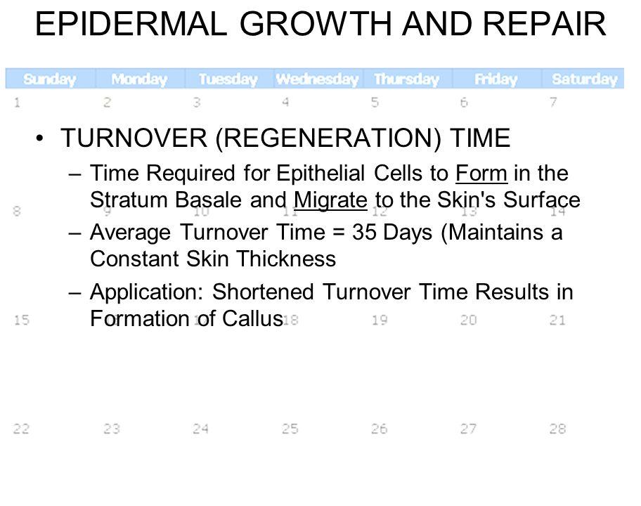 EPIDERMAL GROWTH AND REPAIR