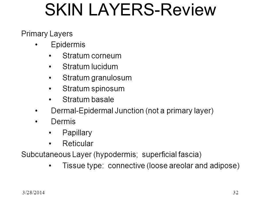 SKIN LAYERS-Review Primary Layers Epidermis Stratum corneum