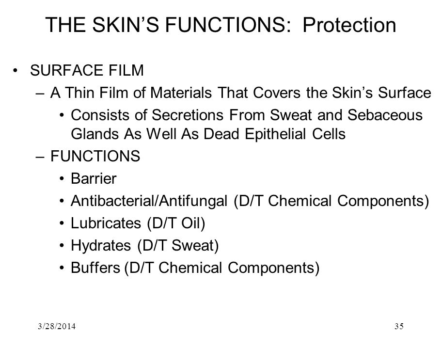 THE SKIN'S FUNCTIONS: Protection