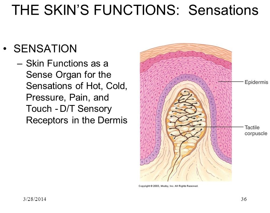 THE SKIN'S FUNCTIONS: Sensations