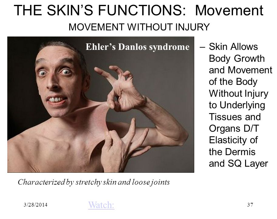 THE SKIN'S FUNCTIONS: Movement