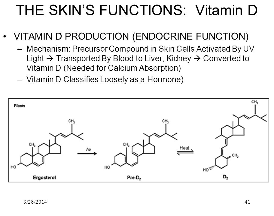 THE SKIN'S FUNCTIONS: Vitamin D