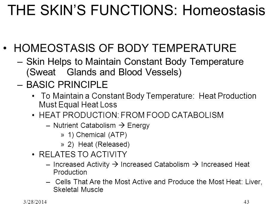 THE SKIN'S FUNCTIONS: Homeostasis