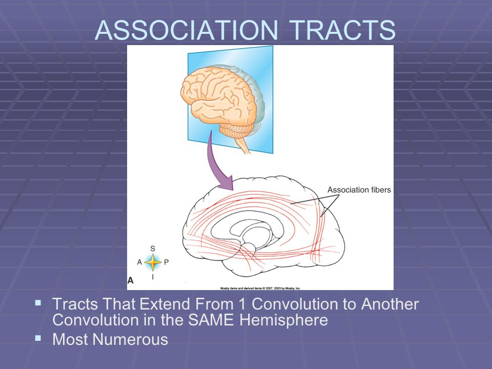 ASSOCIATION TRACTS Tracts That Extend From 1 Convolution to Another Convolution in the SAME Hemisphere.