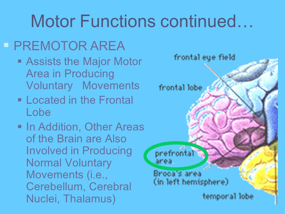 Motor Functions continued…