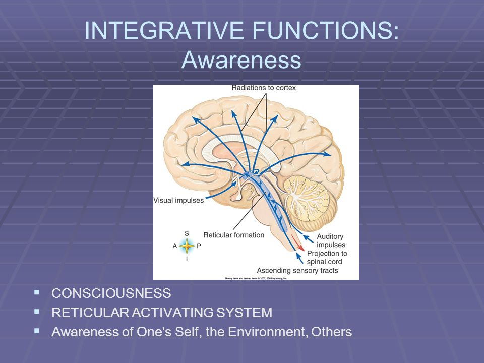 INTEGRATIVE FUNCTIONS: Awareness