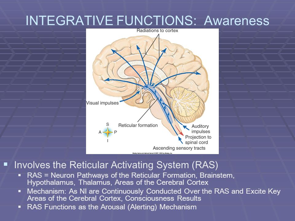 INTEGRATIVE FUNCTIONS: Awareness