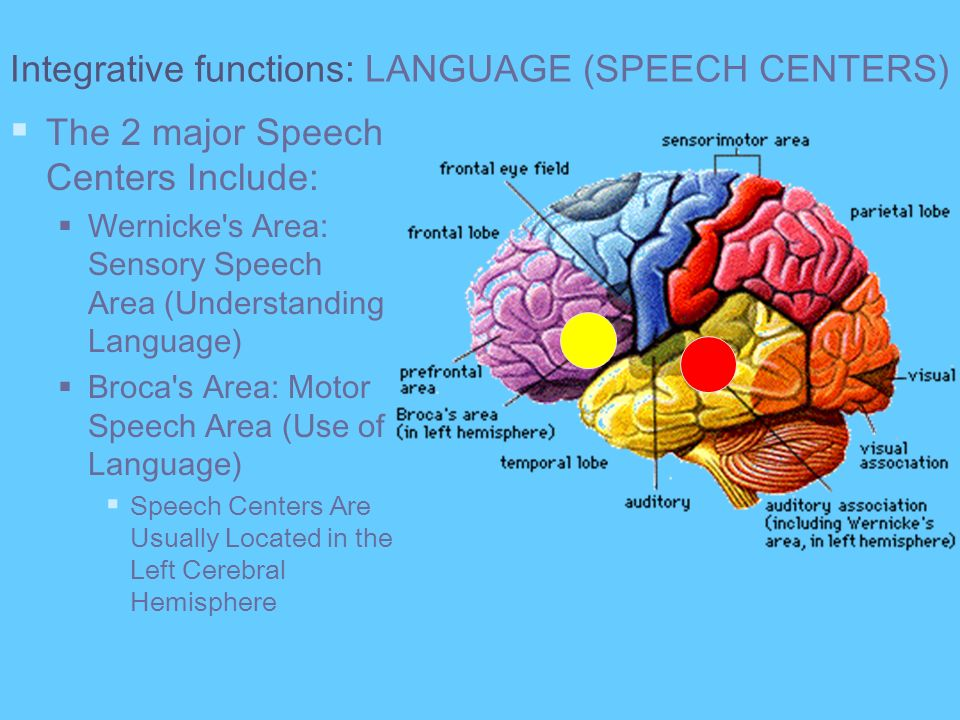 Integrative functions: LANGUAGE (SPEECH CENTERS)