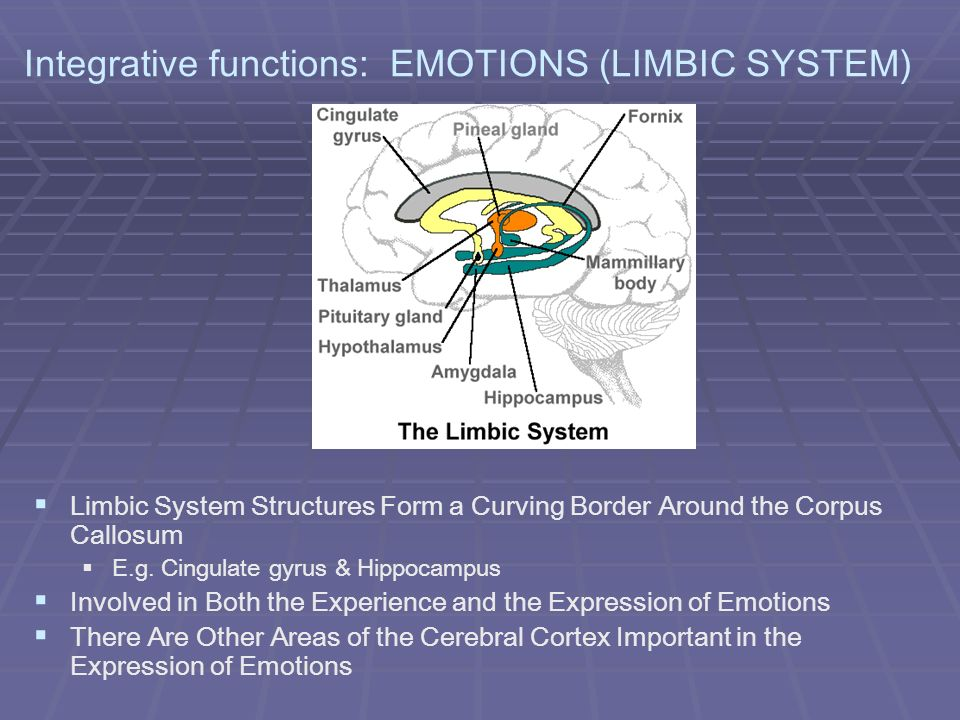 Integrative functions: EMOTIONS (LIMBIC SYSTEM)