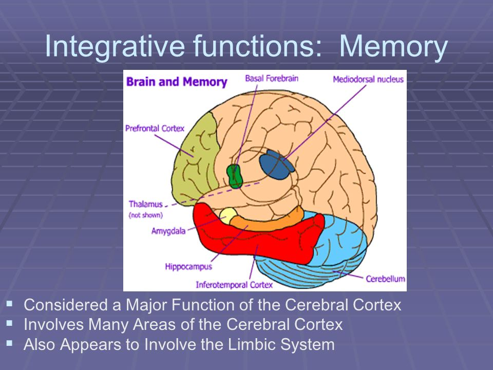 Integrative functions: Memory