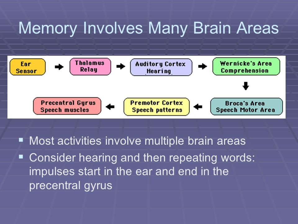 Memory Involves Many Brain Areas