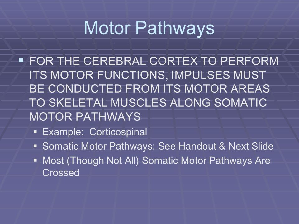 Motor Pathways