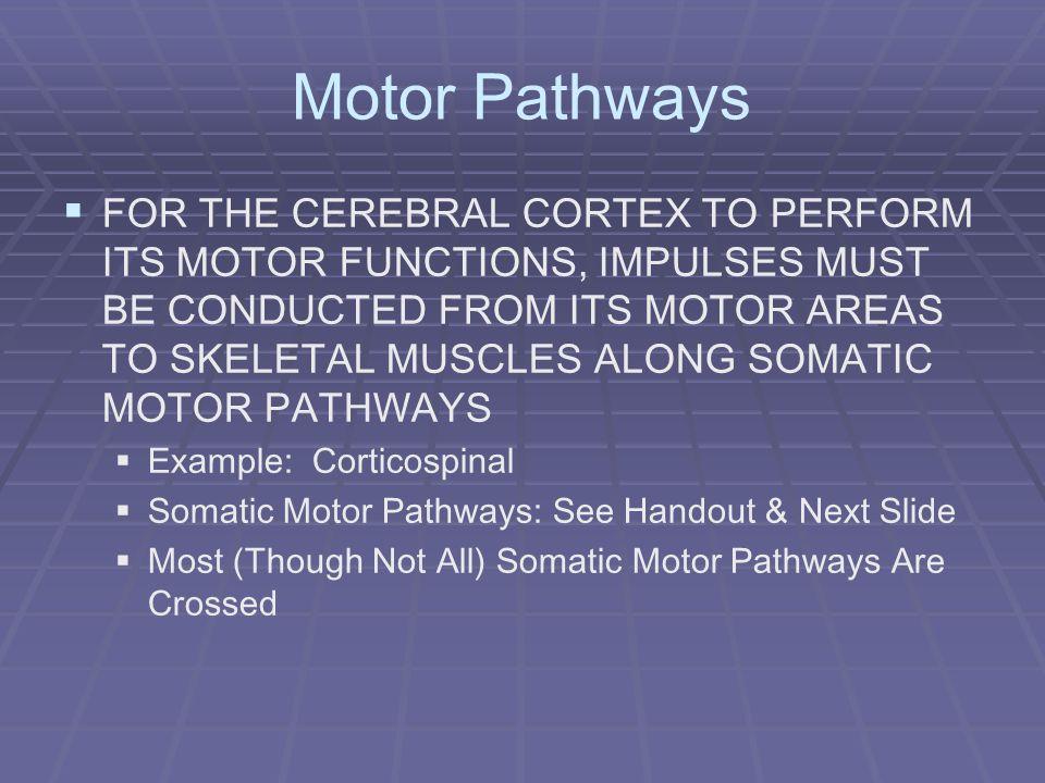 Motor Pathways