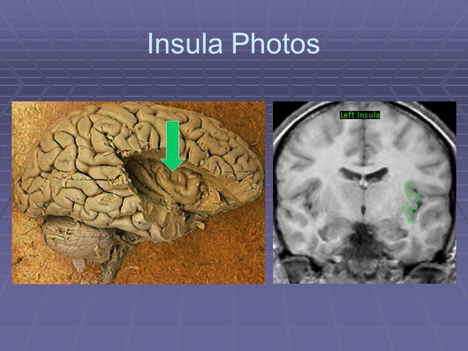 Insula Photos