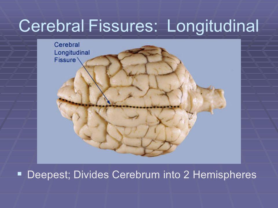 Cerebral Fissures: Longitudinal