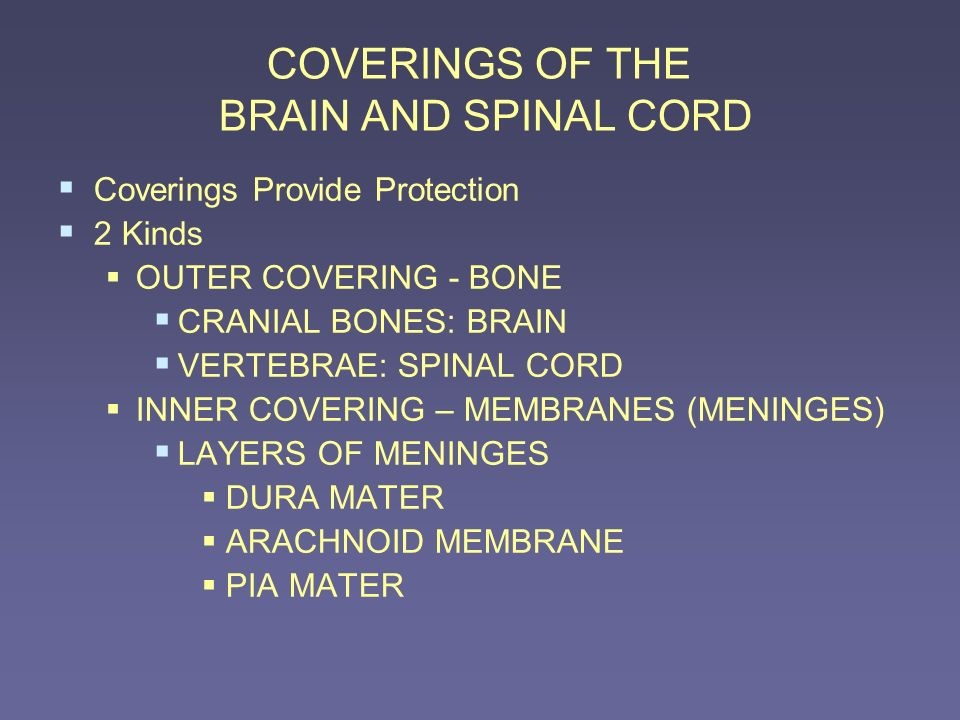 COVERINGS OF THE BRAIN AND SPINAL CORD