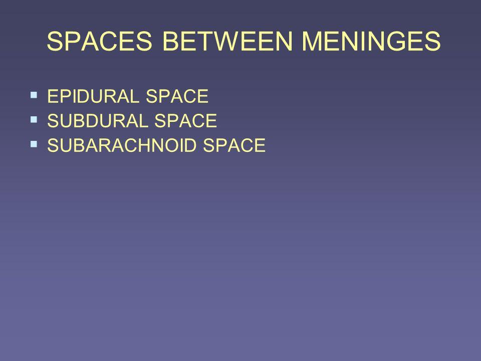 SPACES BETWEEN MENINGES