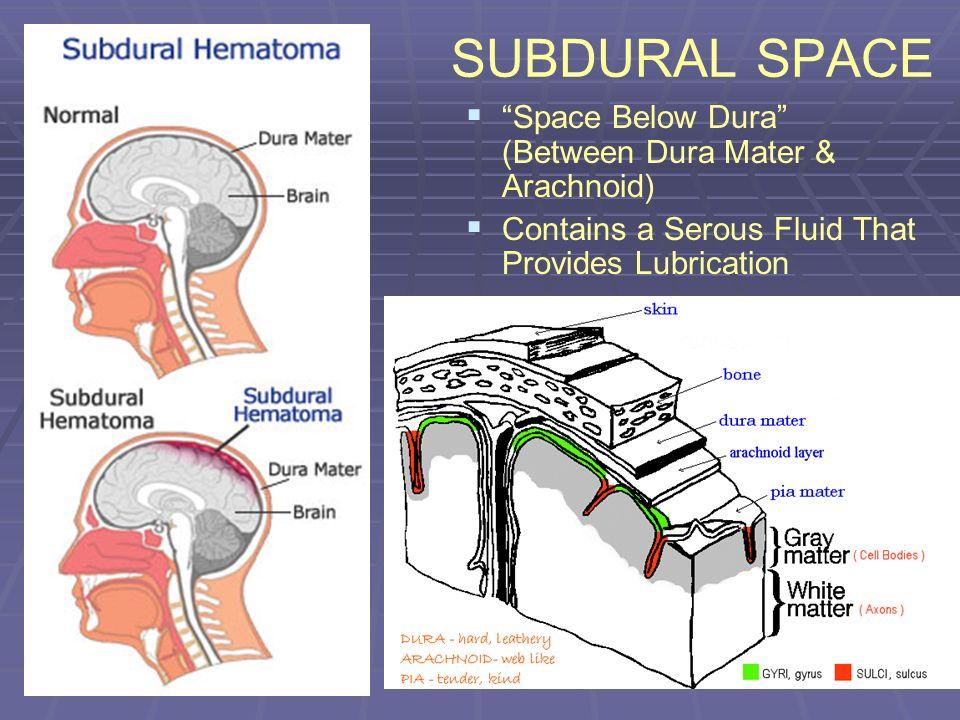 SUBDURAL SPACE Space Below Dura (Between Dura Mater & Arachnoid)