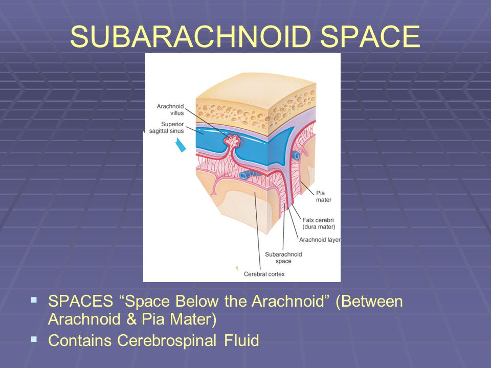 SUBARACHNOID SPACE SPACES Space Below the Arachnoid (Between Arachnoid & Pia Mater) Contains Cerebrospinal Fluid.