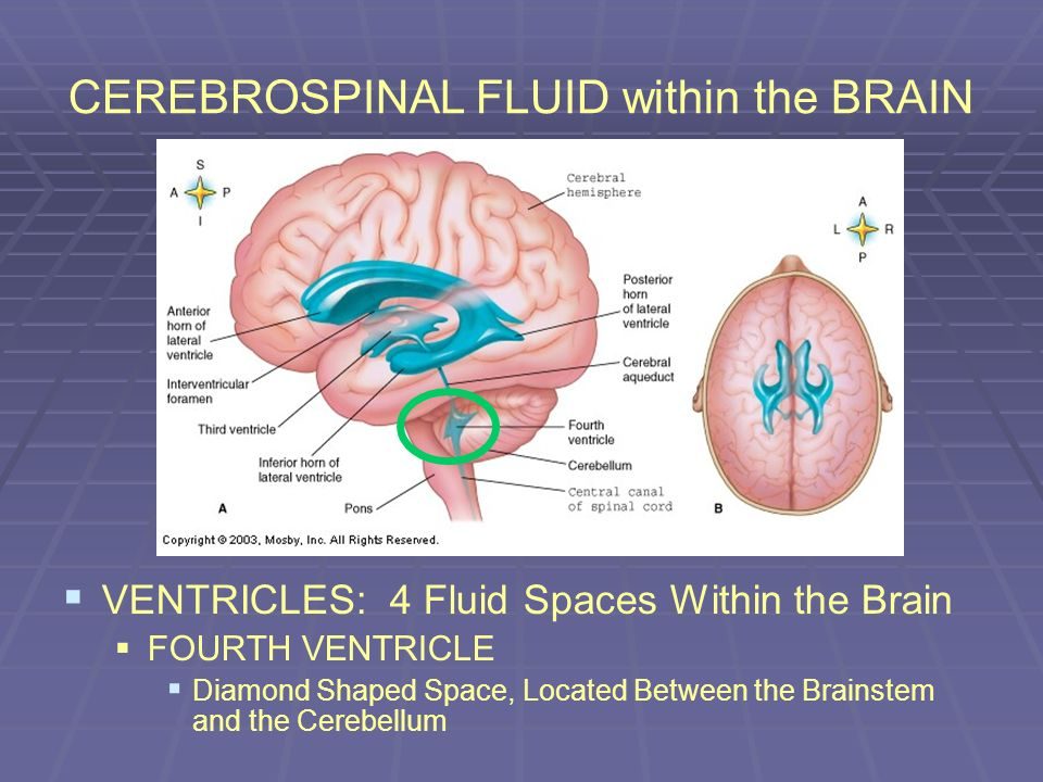 CEREBROSPINAL FLUID within the BRAIN