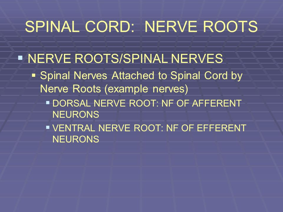 SPINAL CORD: NERVE ROOTS