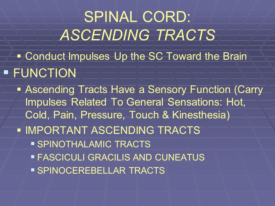 SPINAL CORD: ASCENDING TRACTS