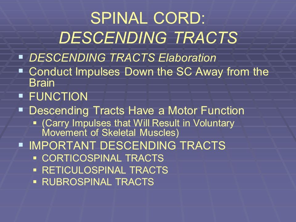 SPINAL CORD: DESCENDING TRACTS