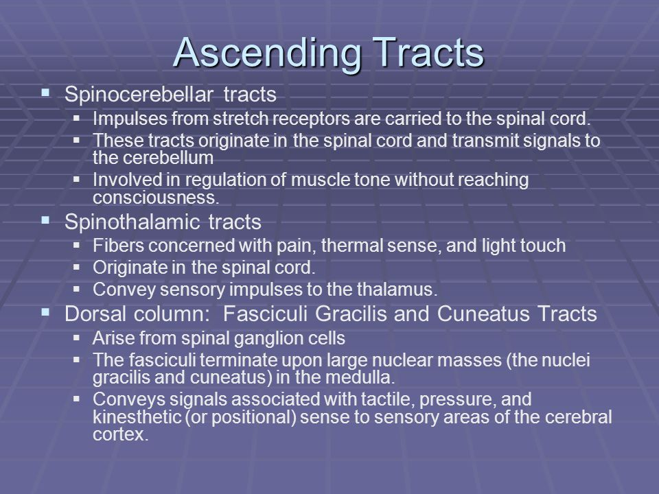Ascending Tracts Spinocerebellar tracts Spinothalamic tracts