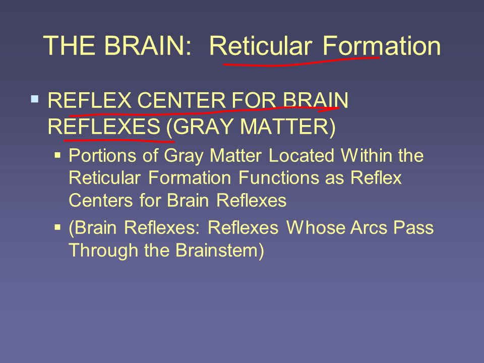 THE BRAIN: Reticular Formation