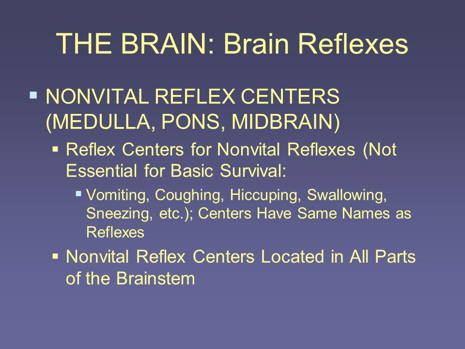 THE BRAIN: Brain Reflexes