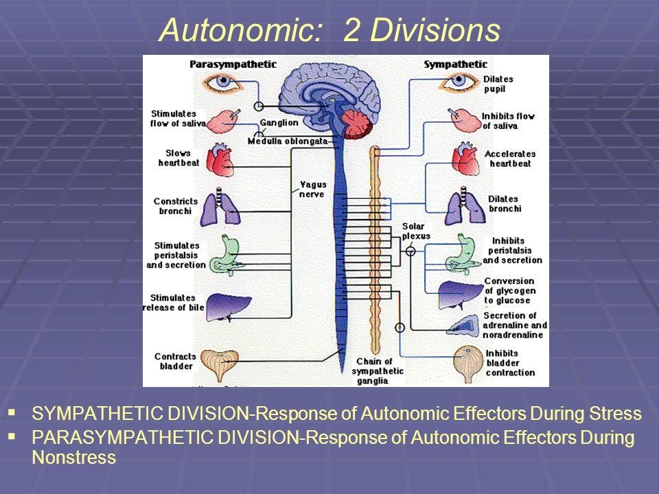 Autonomic: 2 Divisions SYMPATHETIC DIVISION-Response of Autonomic Effectors During Stress.