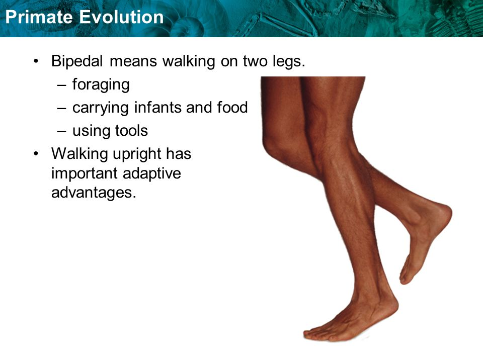 Bipedal means walking on two legs.