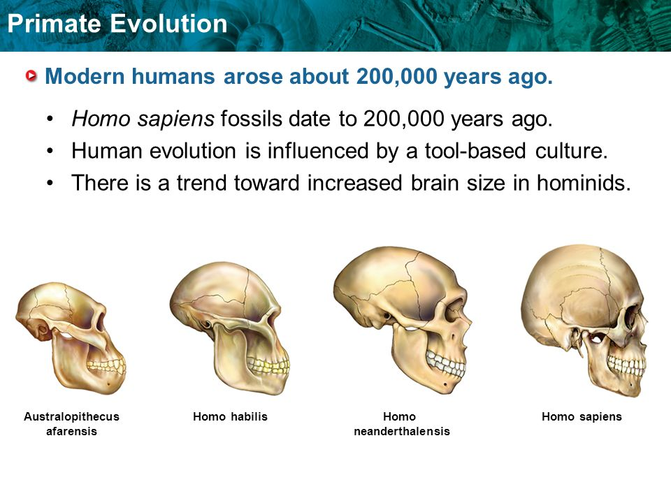 Modern humans arose about 200,000 years ago.