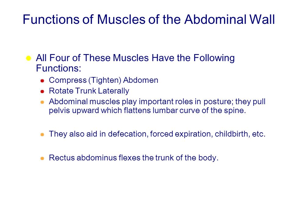 Functions of Muscles of the Abdominal Wall