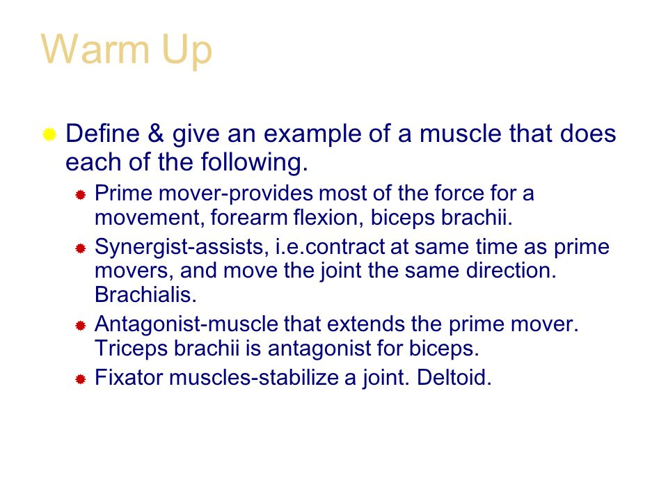 Warm Up Define & give an example of a muscle that does each of the following.