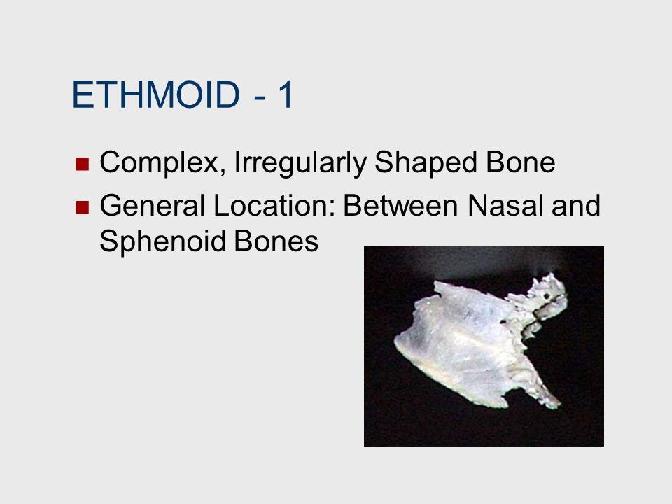 ETHMOID ‑ 1 Complex, Irregularly Shaped Bone