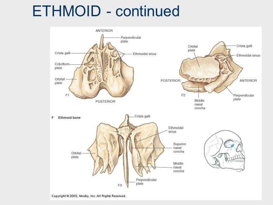 ETHMOID ‑ continued