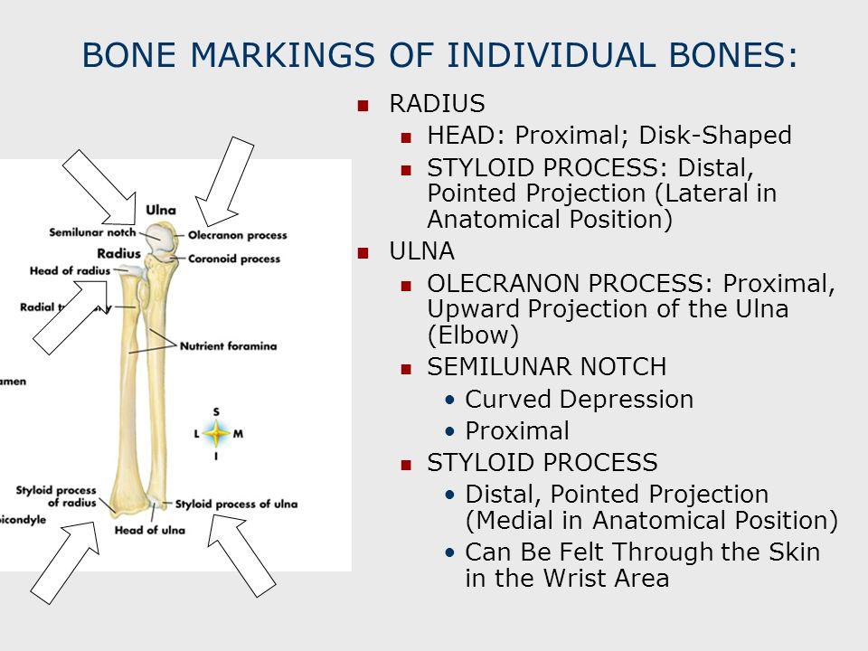 BONE MARKINGS OF INDIVIDUAL BONES: