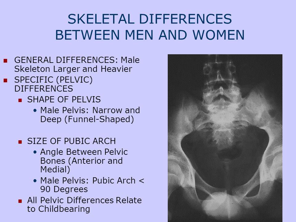 SKELETAL DIFFERENCES BETWEEN MEN AND WOMEN