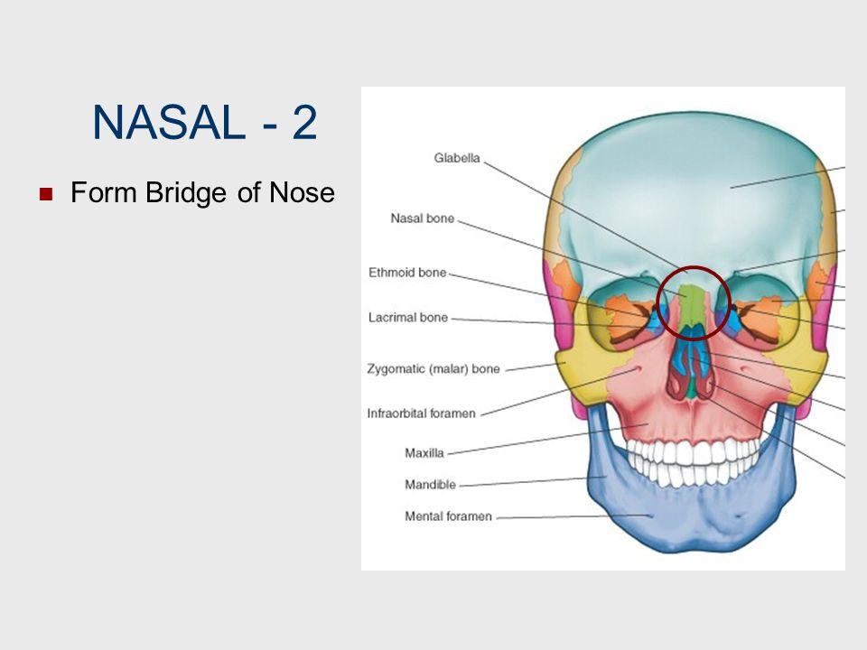 NASAL ‑ 2 Form Bridge of Nose