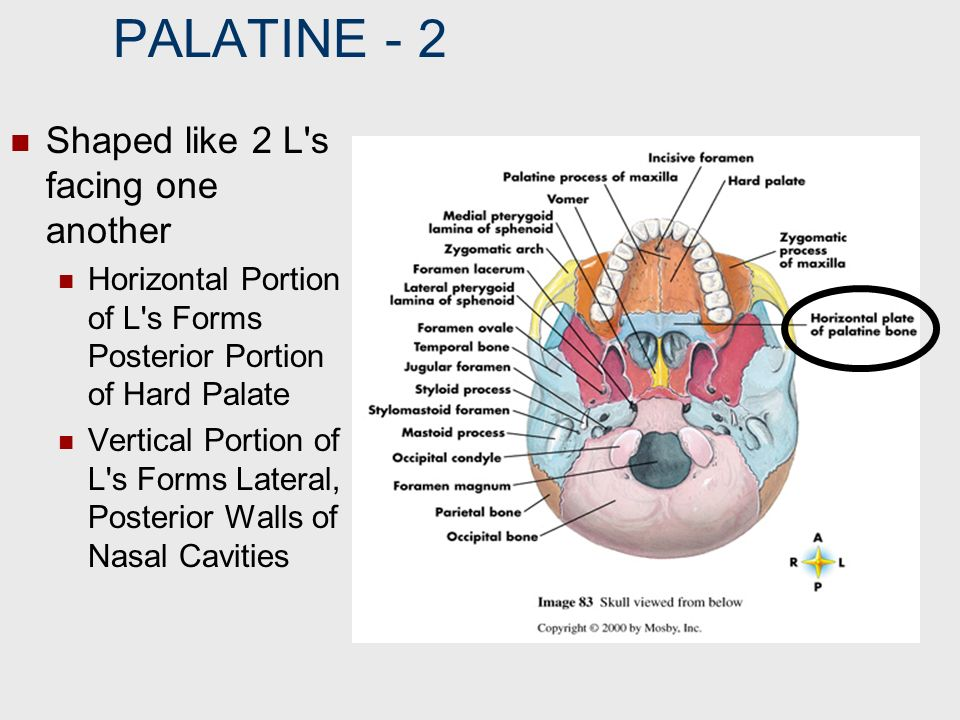 PALATINE ‑ 2 Shaped like 2 L s facing one another