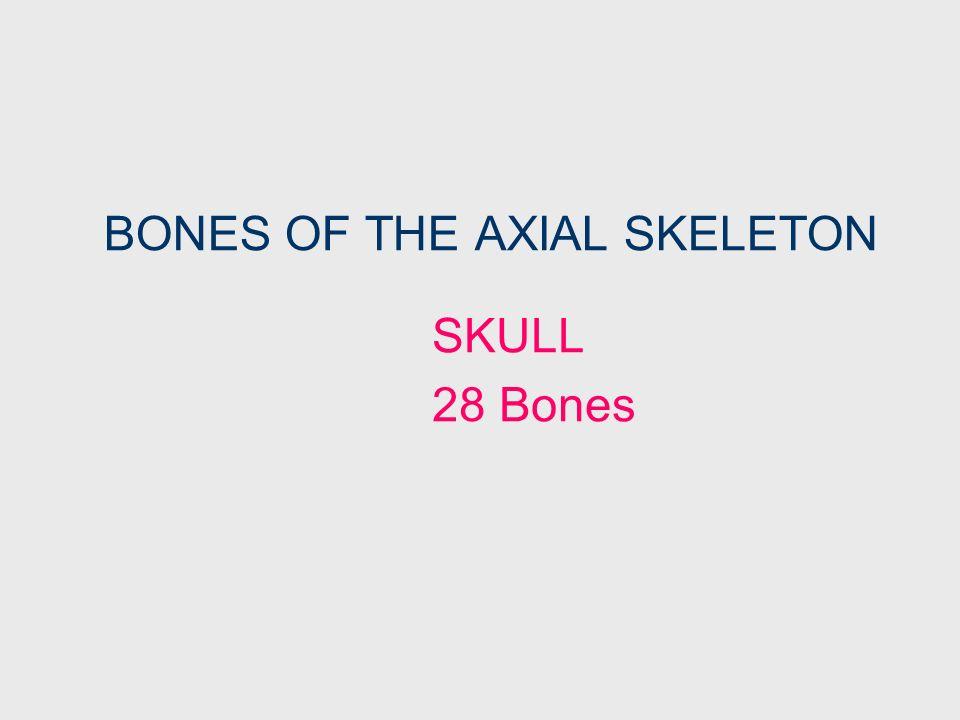BONES OF THE AXIAL SKELETON
