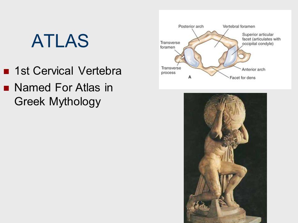ATLAS 1st Cervical Vertebra Named For Atlas in Greek Mythology