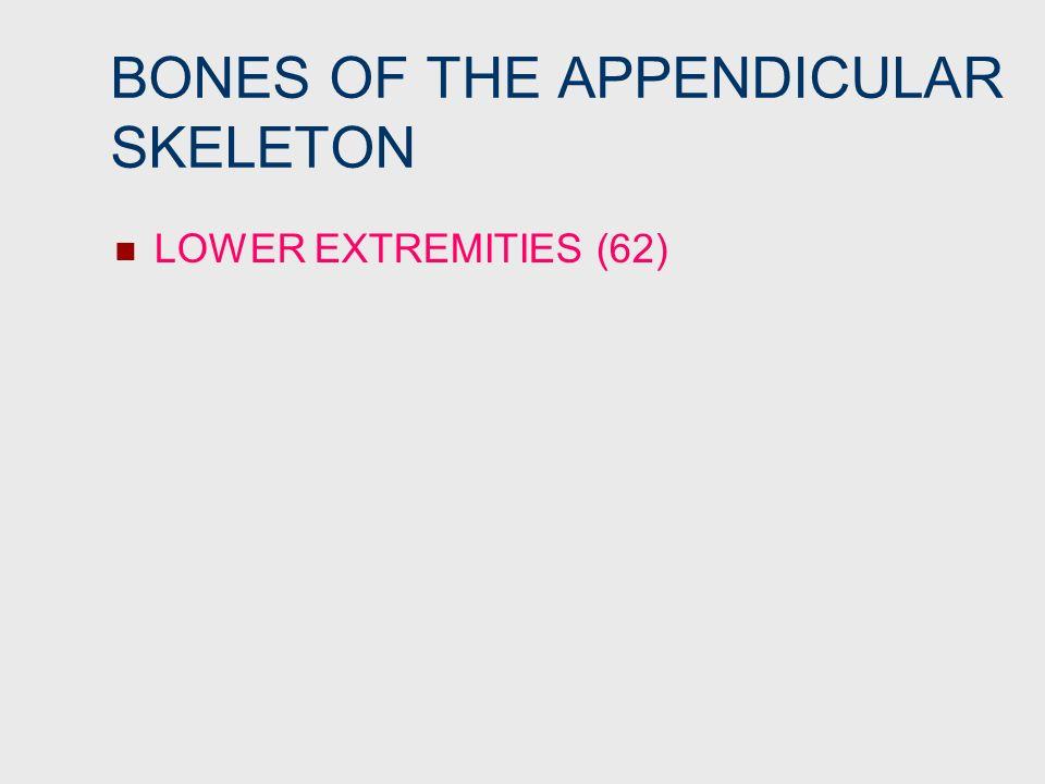 BONES OF THE APPENDICULAR SKELETON