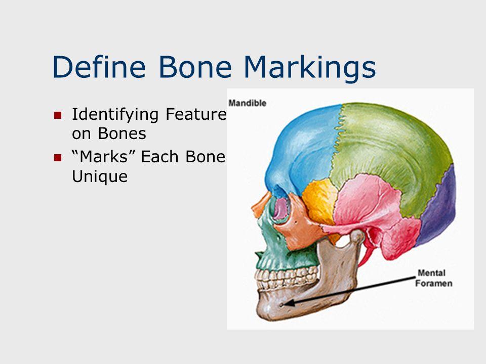 Define Bone Markings Identifying Features on Bones